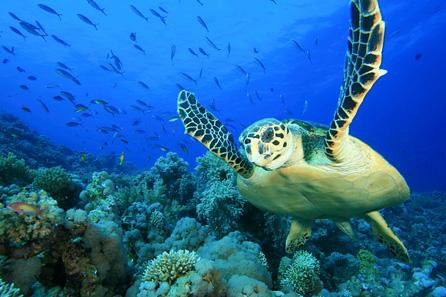海が驚くほど綺麗!鹿児島県の「与論島」が人気