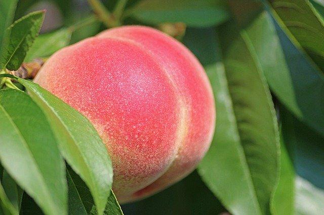 「桃」が最近注目されています♩