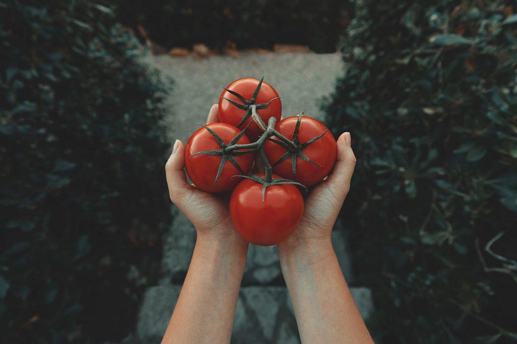 「朝トマト」を実践!